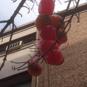 NY fruit