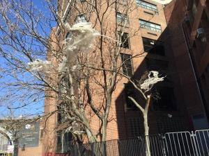 plastic in tree